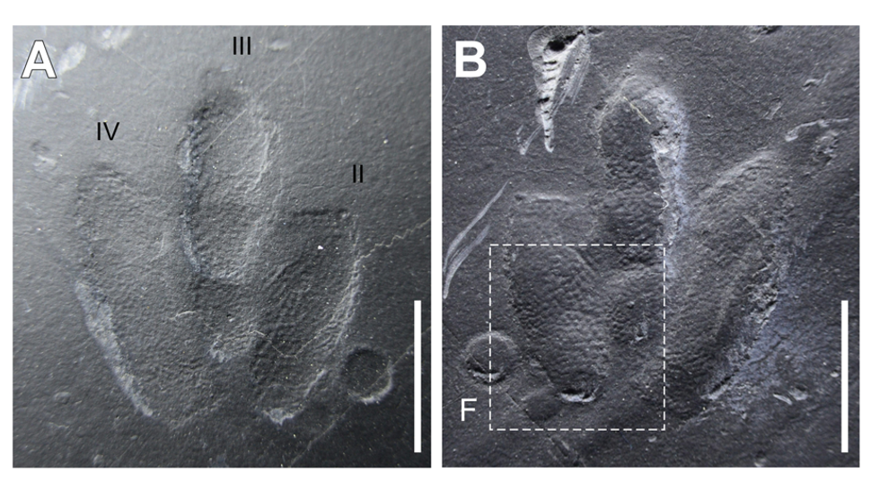 Intricate Skin Impressions Still Visible On 'Exquisitely Preserved' Dinosaur Footprints