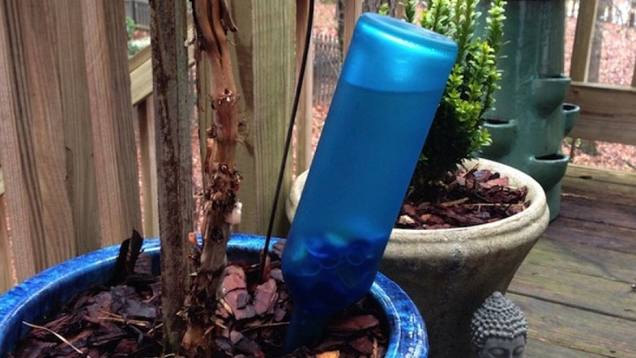 Turn A Wine Bottle Into An Automatic Plant Waterer