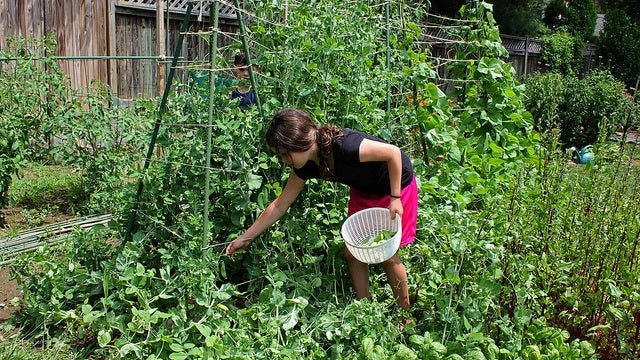 Grow Gardens With Your Kids to Encourage Eating More Vegetables