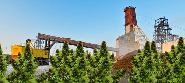 The Latest Mining Boom? Plants That Eat Metal And Scrub The Soil Clean