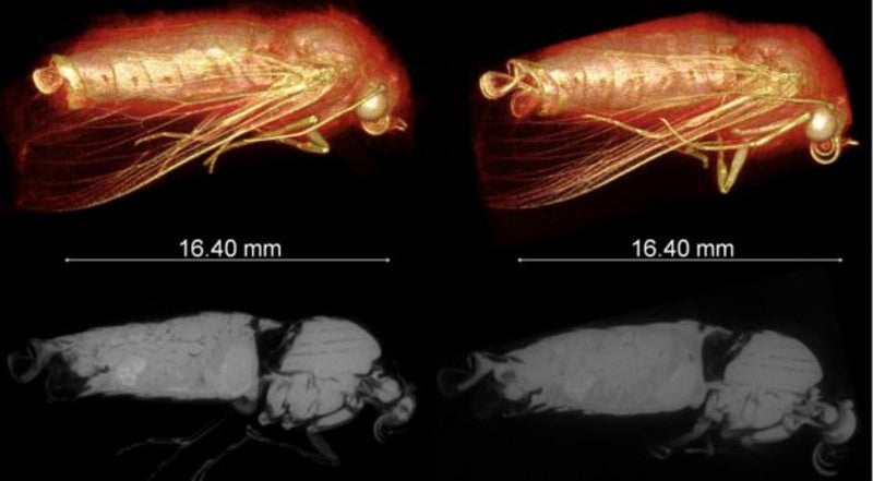 New Technique Creates Stunning 3D Images Of Live Insects