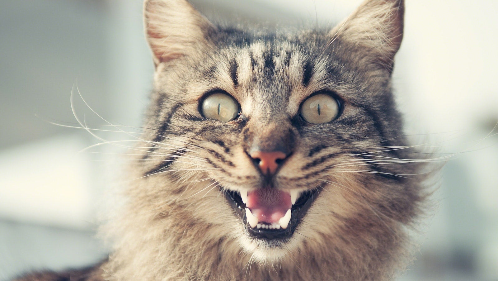 How To Reduce Your Allergic Reaction To Cats