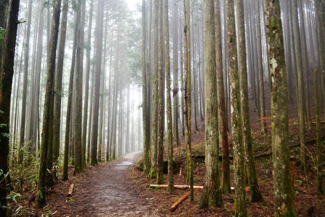 A Lovely Shot Of Tsumago Forest