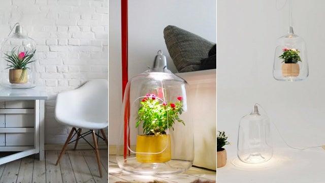 Grow a Miniature Winter Garden With This Hanging Terrarium Lamp