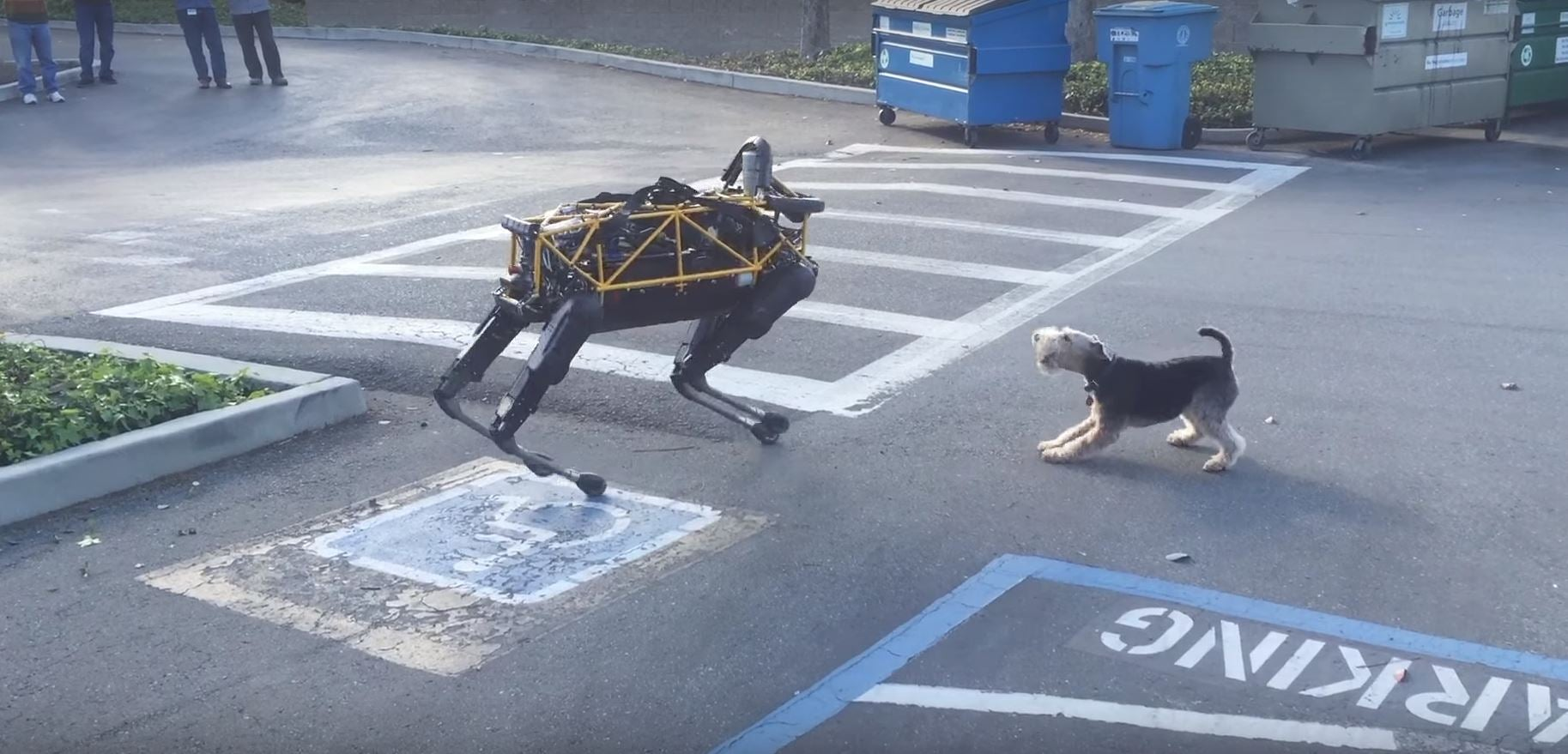 Actual Dogs Don't Like Robotic Dogs Either