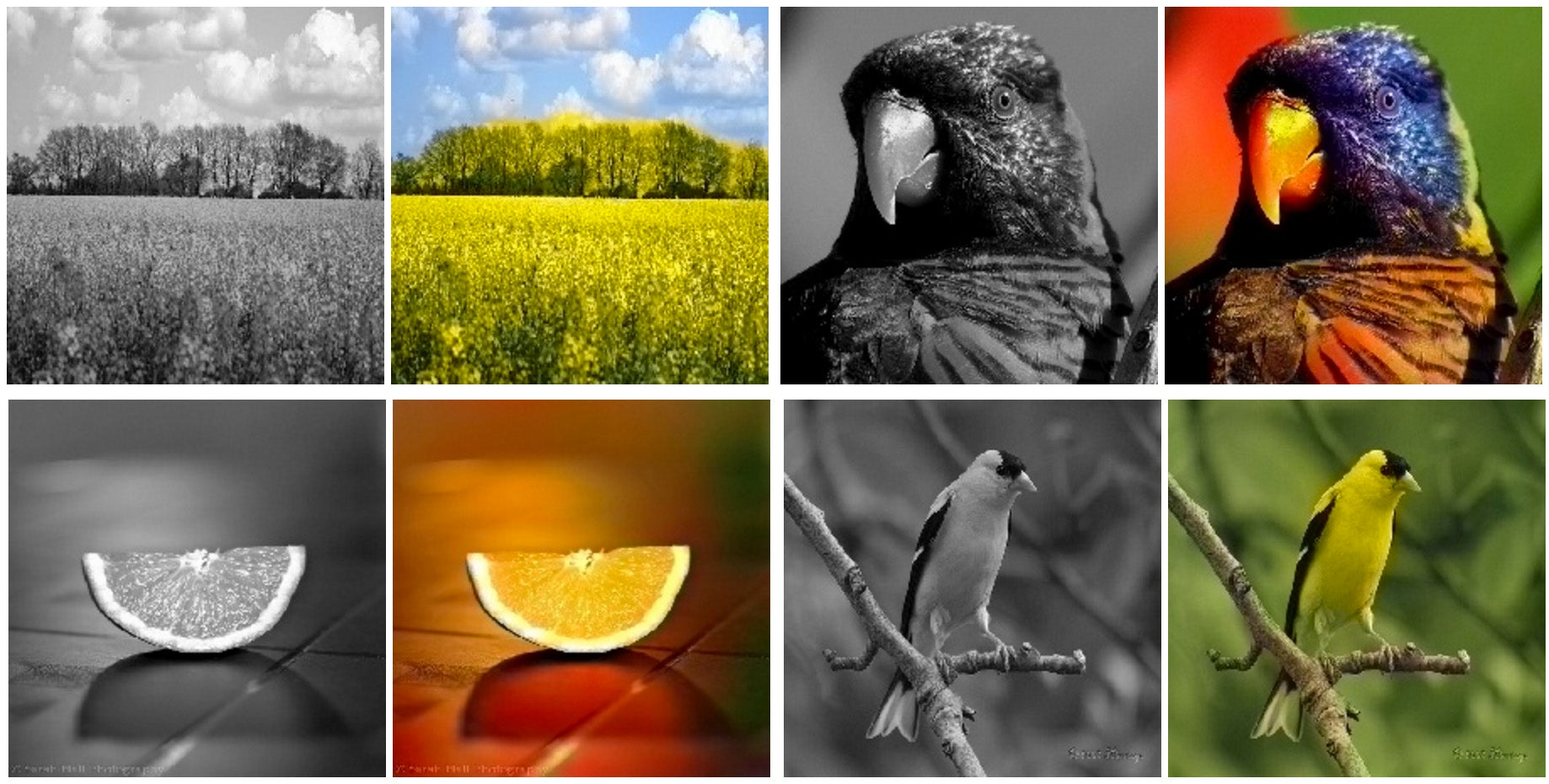 This Software Creates Vivid Colour Pictures From Black-and-White Photos