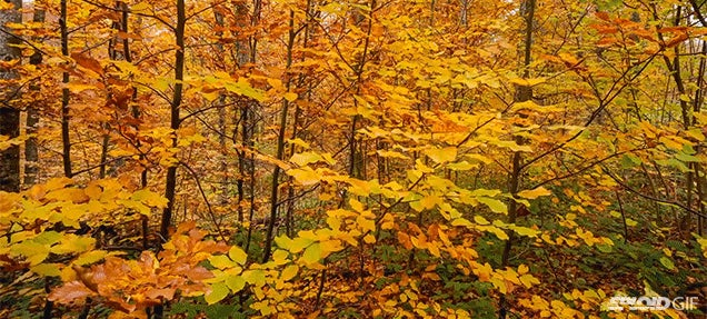 Video: The spectacular colours of fall make it the most beautiful season