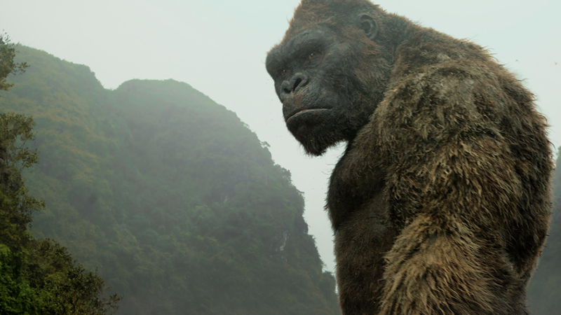 King Kong May Extend His Rule To Live-Action TV