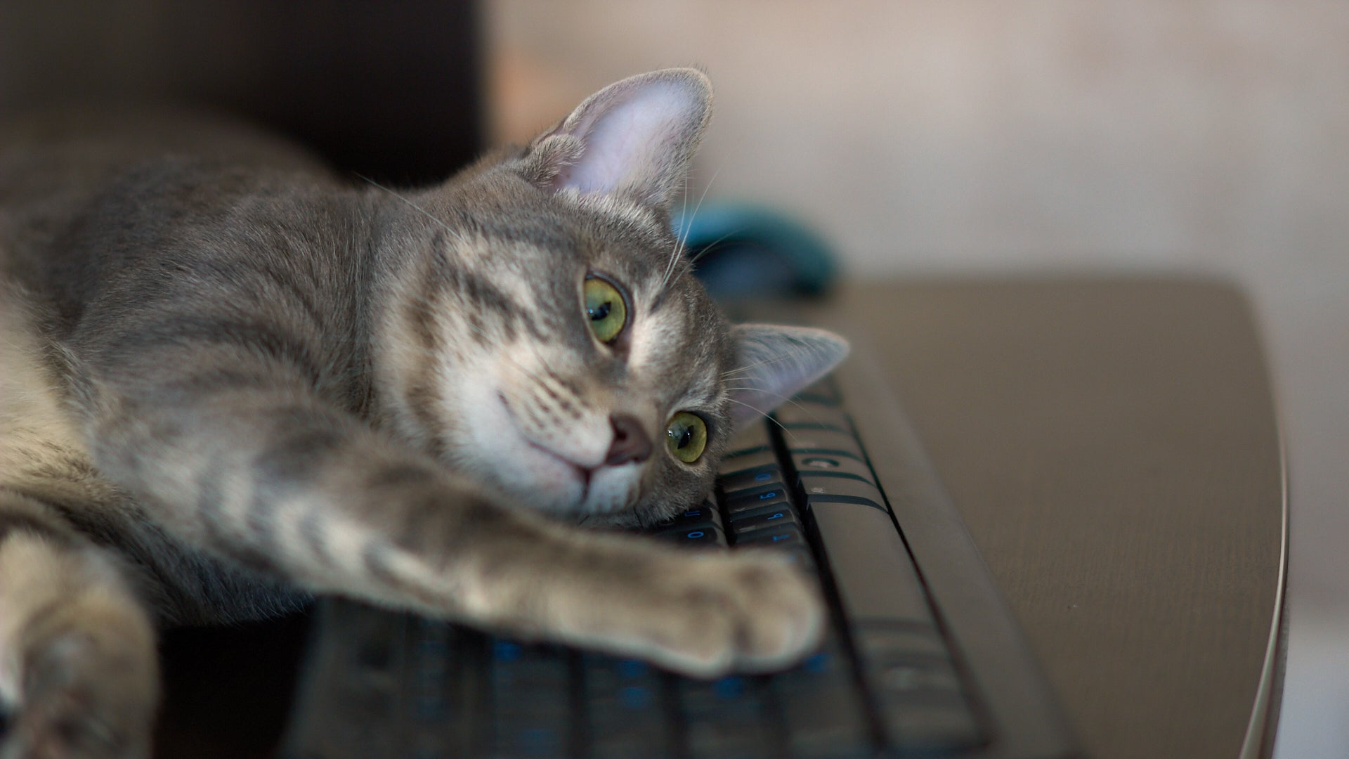 Get A Decoy Keyboard For Your Cat To Enjoy
