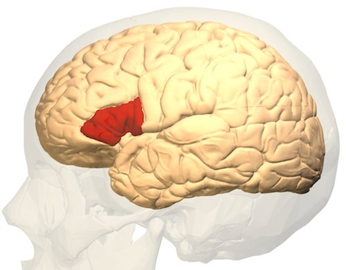 Why the Speech Center of Your Brain Shuts Down When You Talk