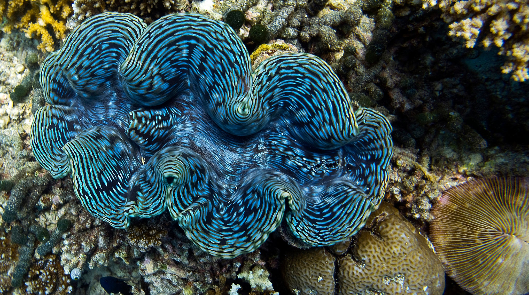 Giant Clams Light Up Like Plasma Screens, Only Better