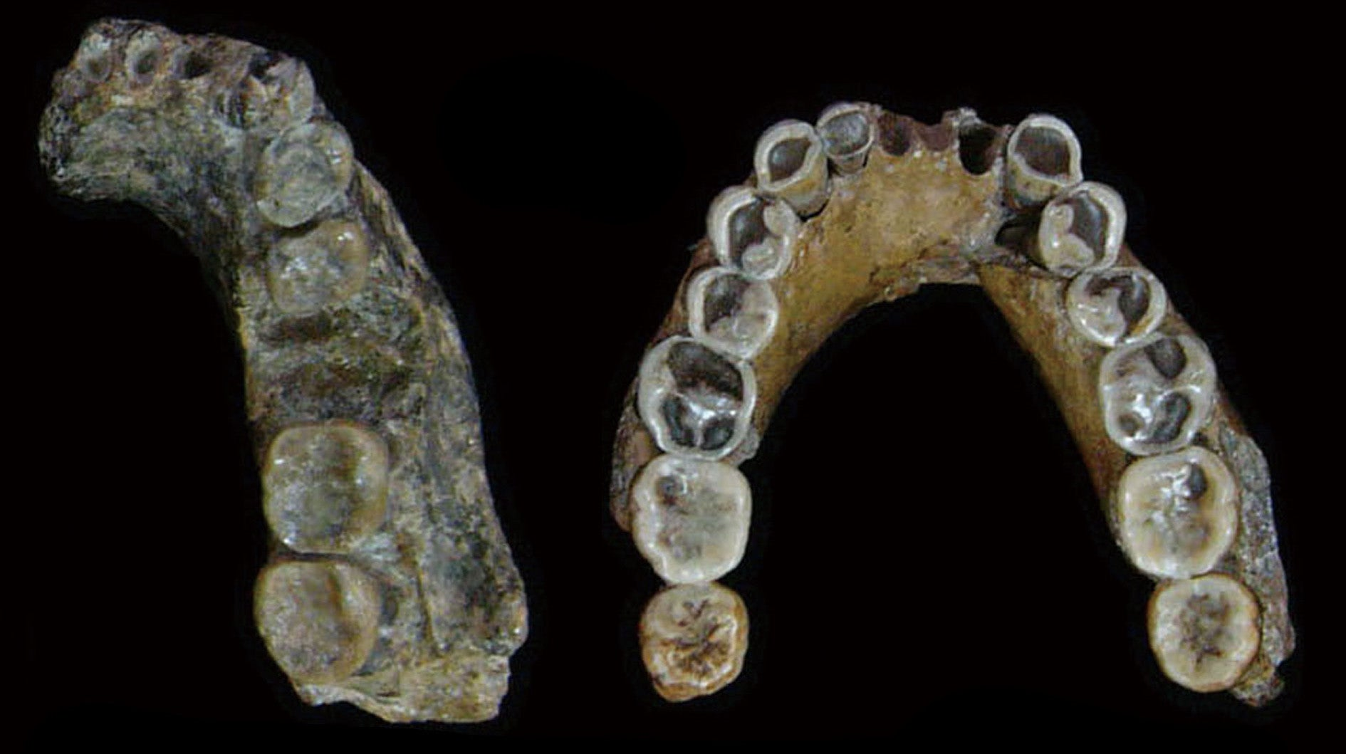 An Extinct Human Species May Not Have Evolved In Asia After All, New Research Suggests