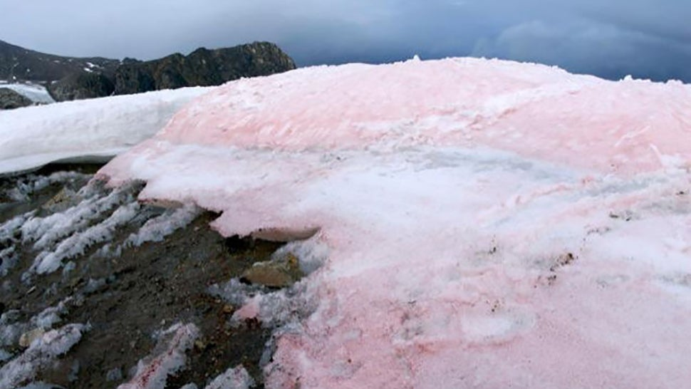Watermelon snow spells doom for Arctic