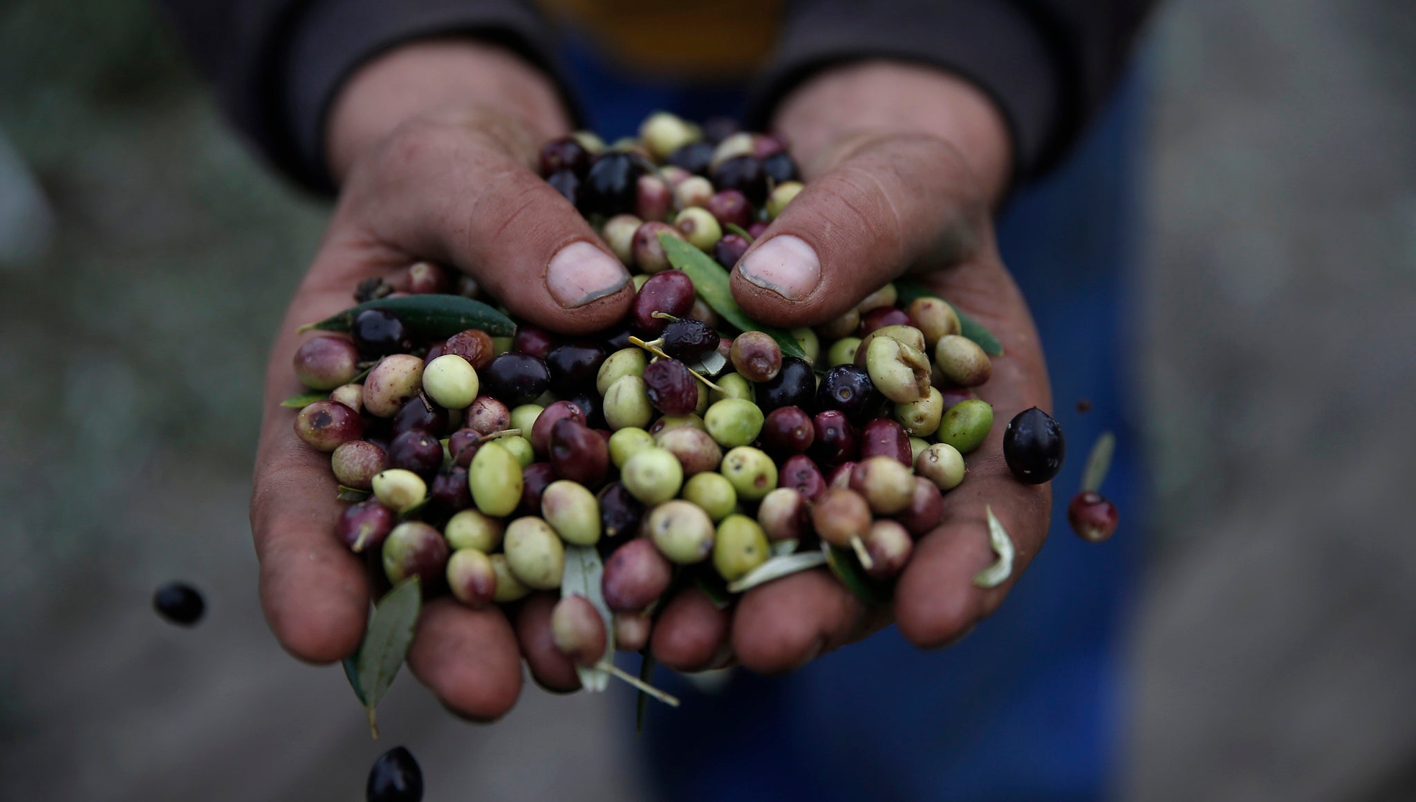 You Don't Need To Freak Out About The Olive Oil Apocalypse