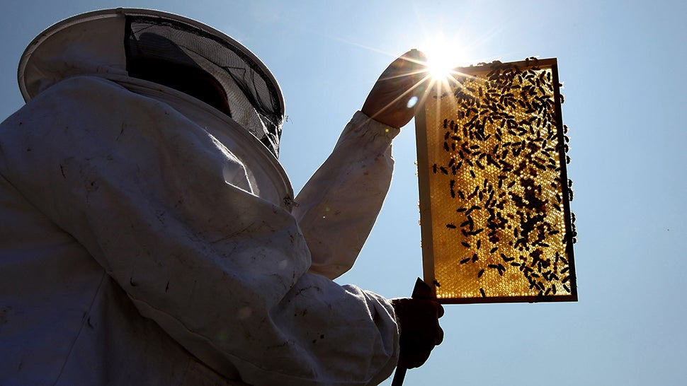 Beehive Thefts Explode In New Zealand Because The Bees Can't Catch A Break