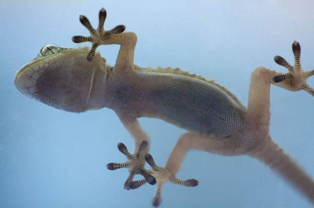 These Gloves Let You Climb A Glass Wall Like A Gecko