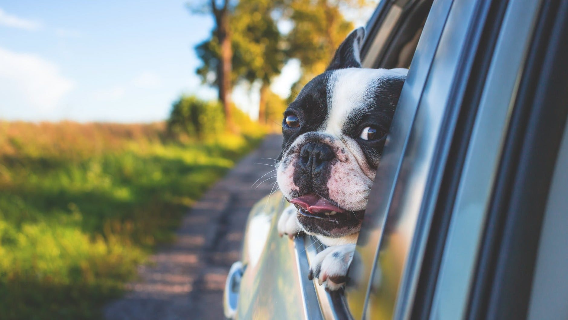 How To Know If Your Dog Is Getting Car Sick