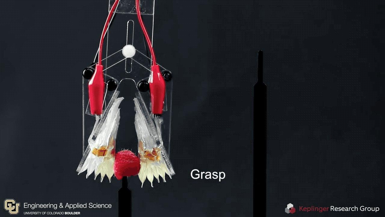 This Soft, Self-Healing Robot Mimics How Human Muscles Move