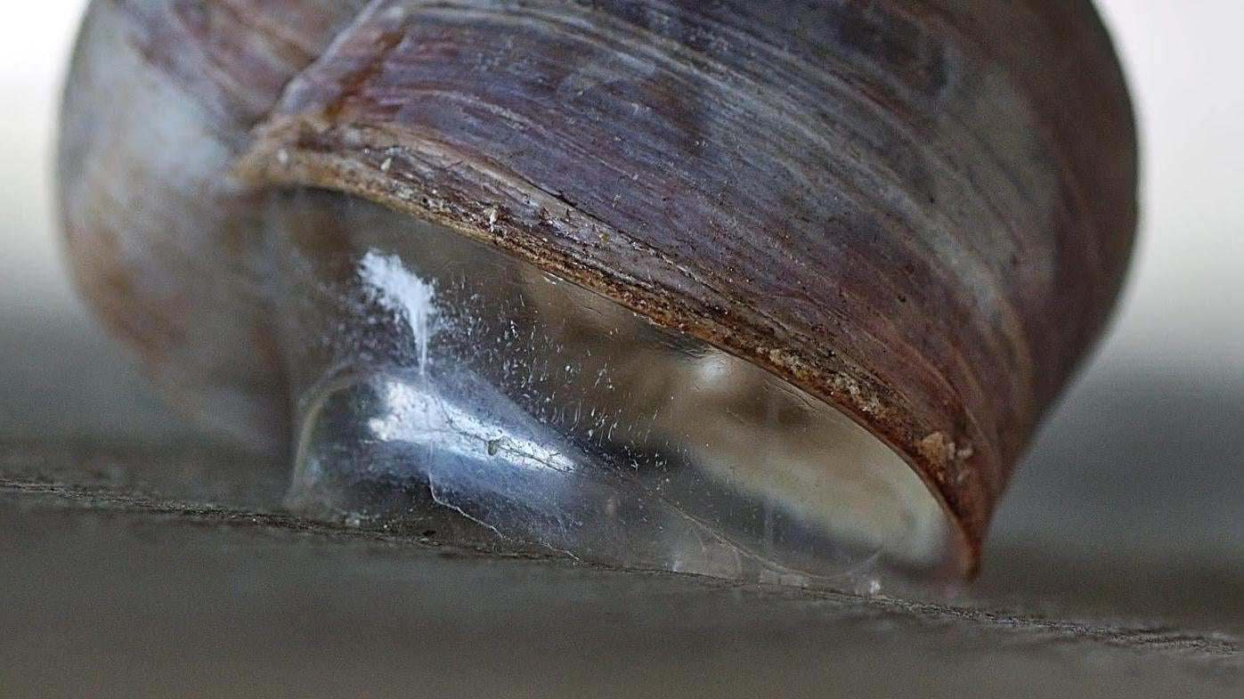 This Snail-Inspired, Reusable Adhesive Is Far Stronger Than Velcro