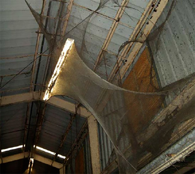 4-acre spider web may be the grossest thing you will see this Halloween*