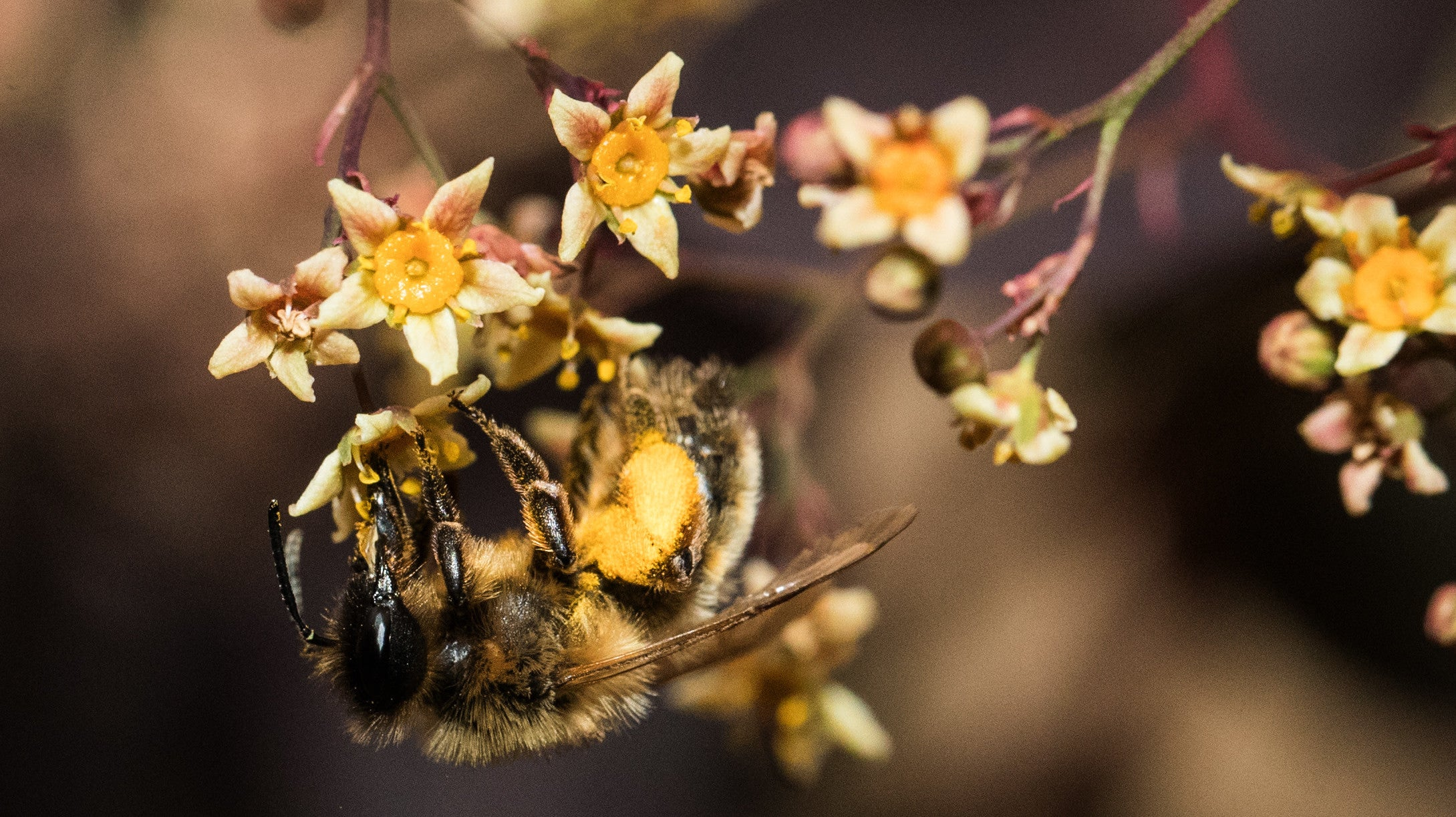 Genius Bees Force Plants To Bloom By Biting Them