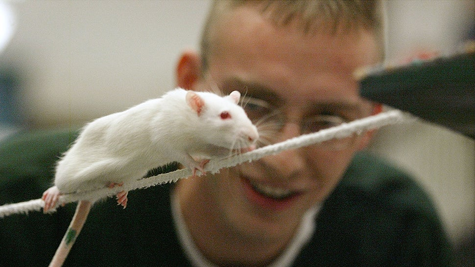 Cannabis Microdosing Mice Study Brings Great News, But There's A Catch