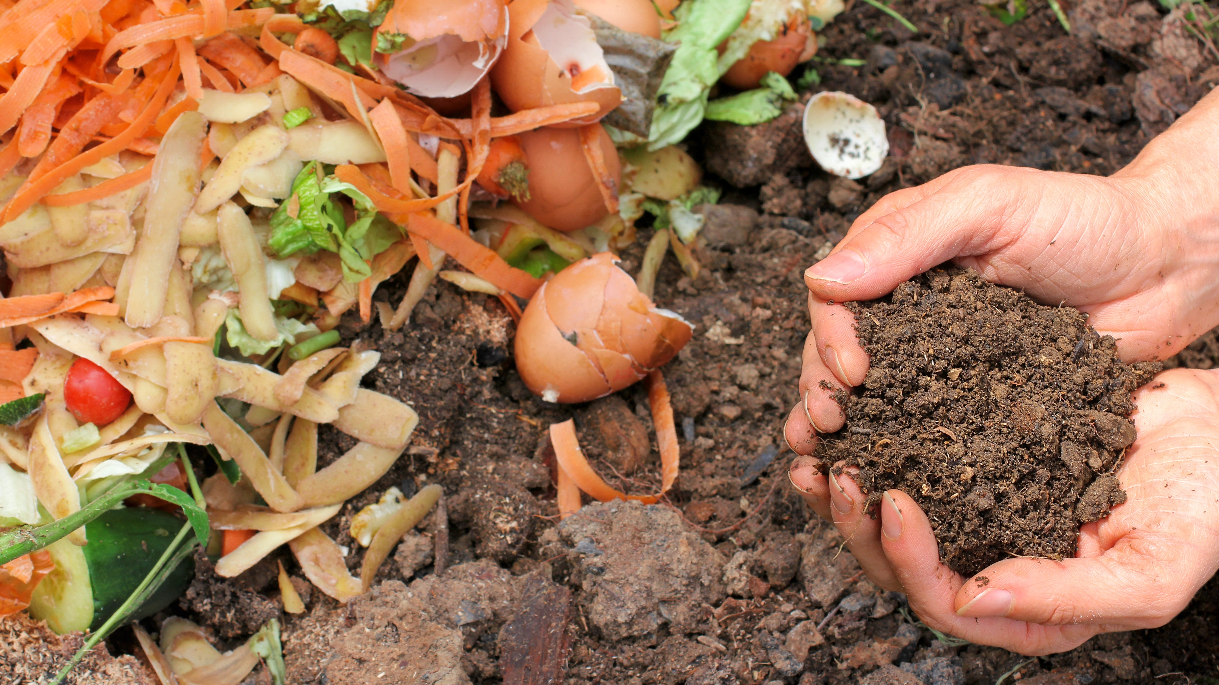 How To Compost In Your Apartment