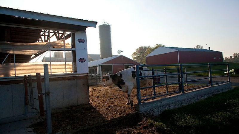 The Coronavirus Outbreak Is Making Dairy Farmers Dump Milk, Even As Food Demand Skyrockets