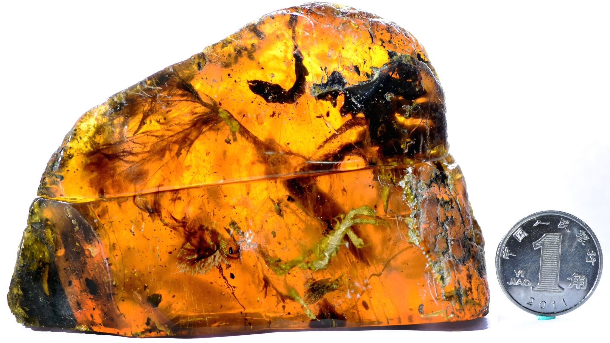 Scientists Find 100 Million-Year-Old,Nearly Complete Baby Bird Trapped In Amber