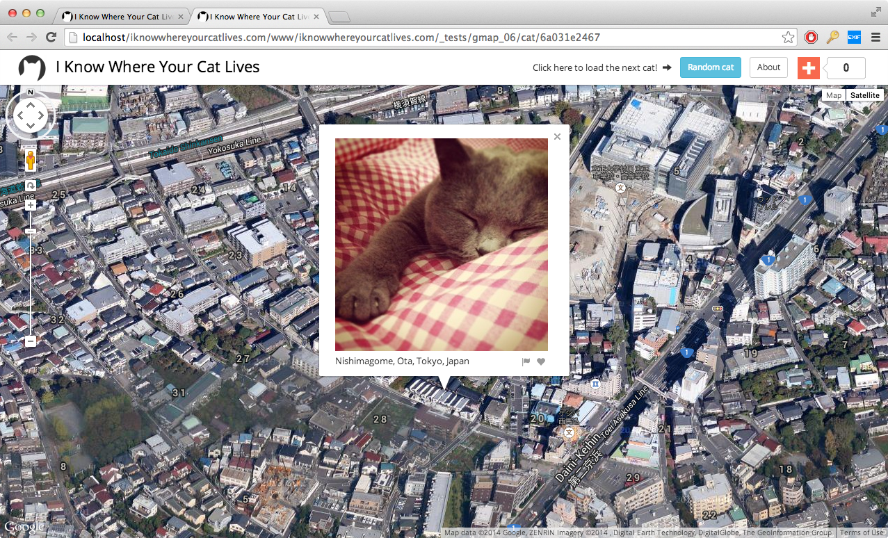 Someone's Figured Out Where One Million Internet Cats Live