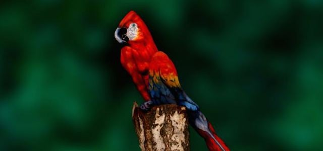 Holy crap, this parrot is actually a woman posing in bodypaint