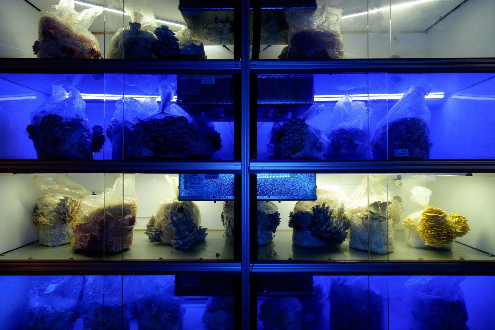 A Fleet Of Networked Mushroom Farms Is Spreading Across New York