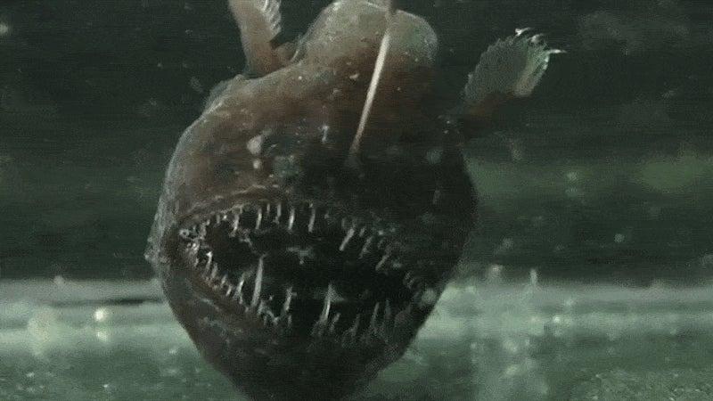 Ten Horrifying Deep Sea Creatures Ranked Gizmodo Australia
