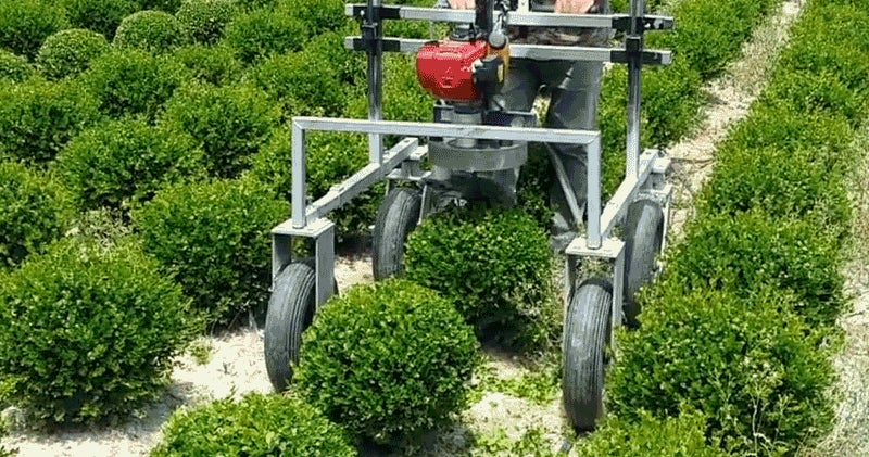 I'm Completely Mesmerised By This Machine Whose Only Function Is Making Tiny Hedge Spheres