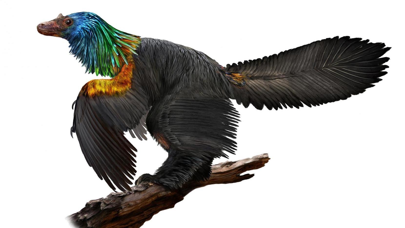 This Bird-Like Dinosaur Featured A Stunning Rainbow-Coloured Mane