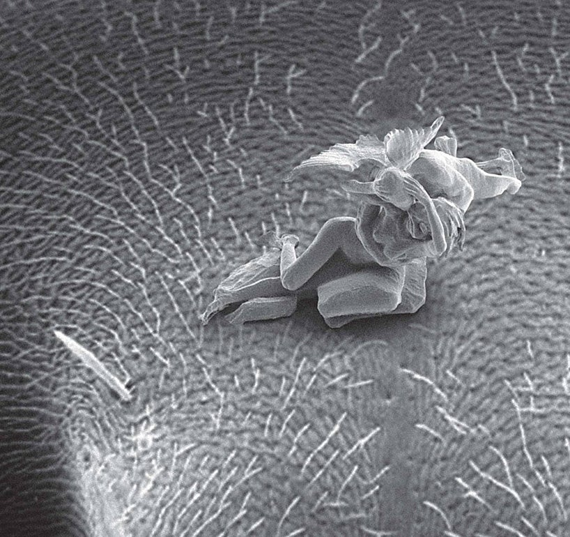 These amazing nudes are the smallest sculptures ever made (NSFW)