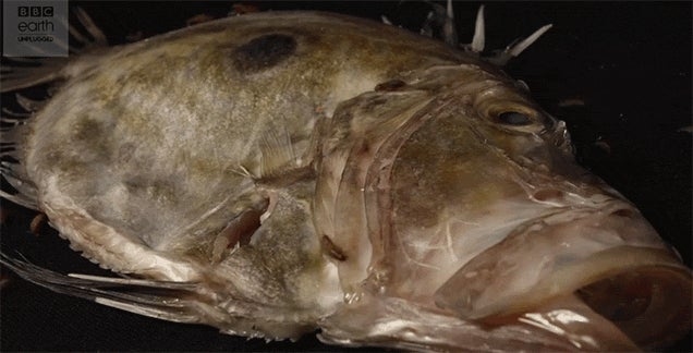 Watch the Grossness That Is Fish Decomposing Over Time