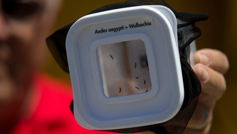 The Many Ways We're Using Mutant Mosquitos to Eradicate Disease