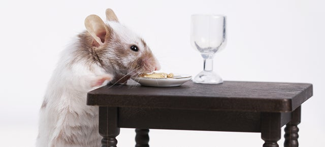 Lab Mice Got Really Unhealthy When They Only Ate Powdered Food