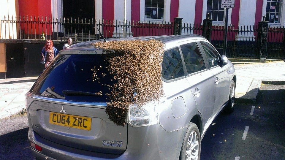 I Wish I Loved Something as Much as These Bees Love This Car