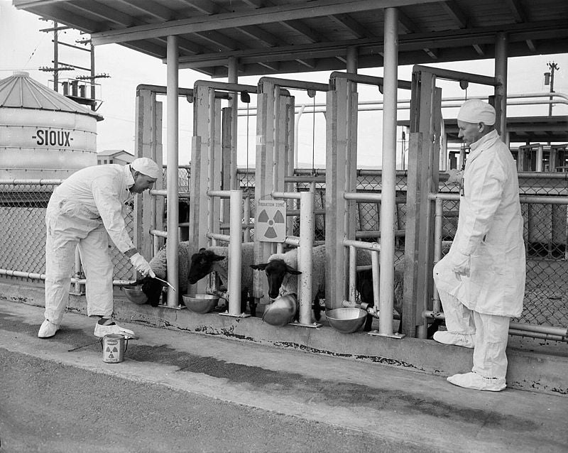 The Tragic Tale of Atomic Man: Life as a Radioactive Human
