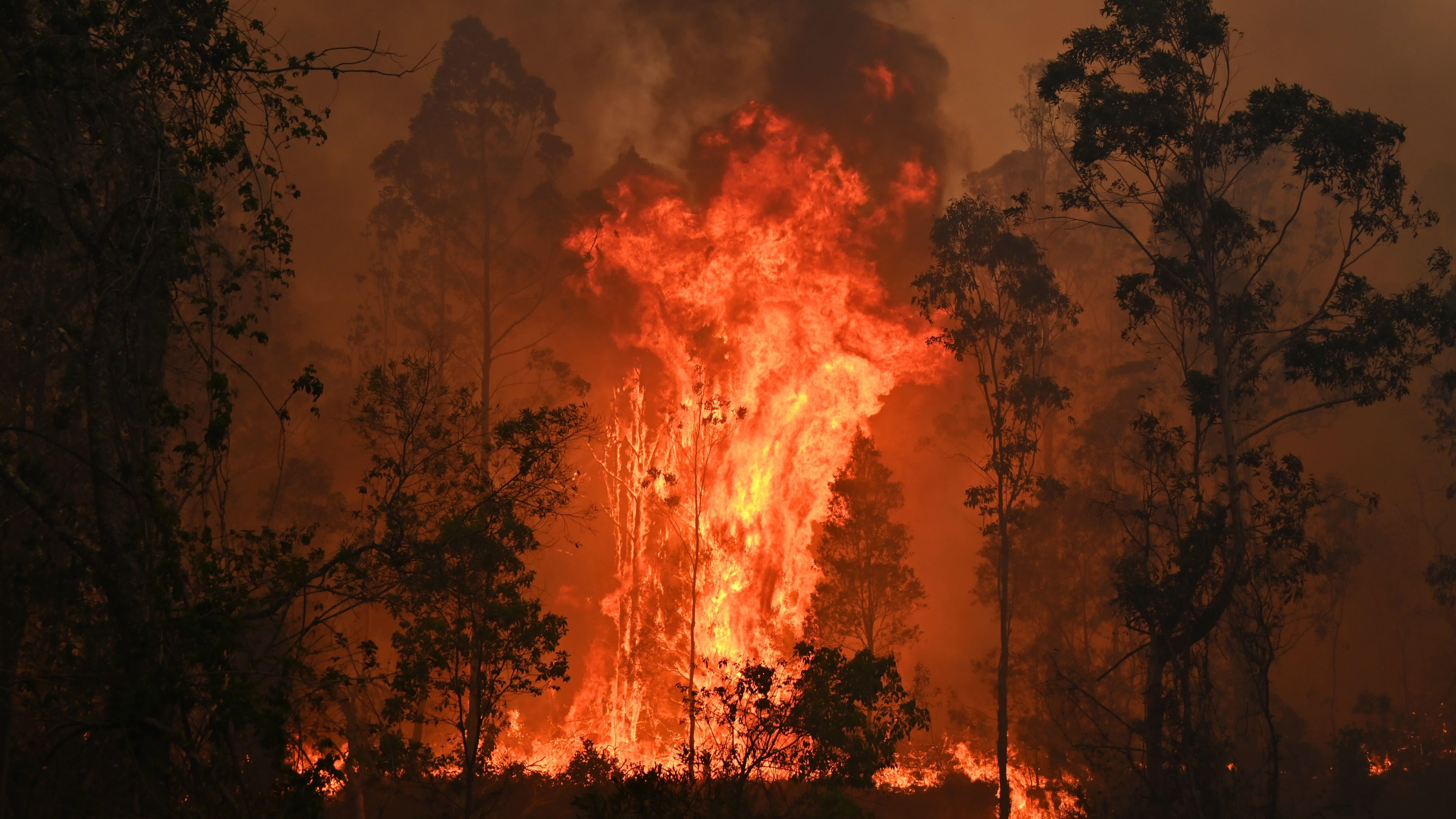We Now Know How Much Climate Change Contributed To Australia's Disastrous Bushfires