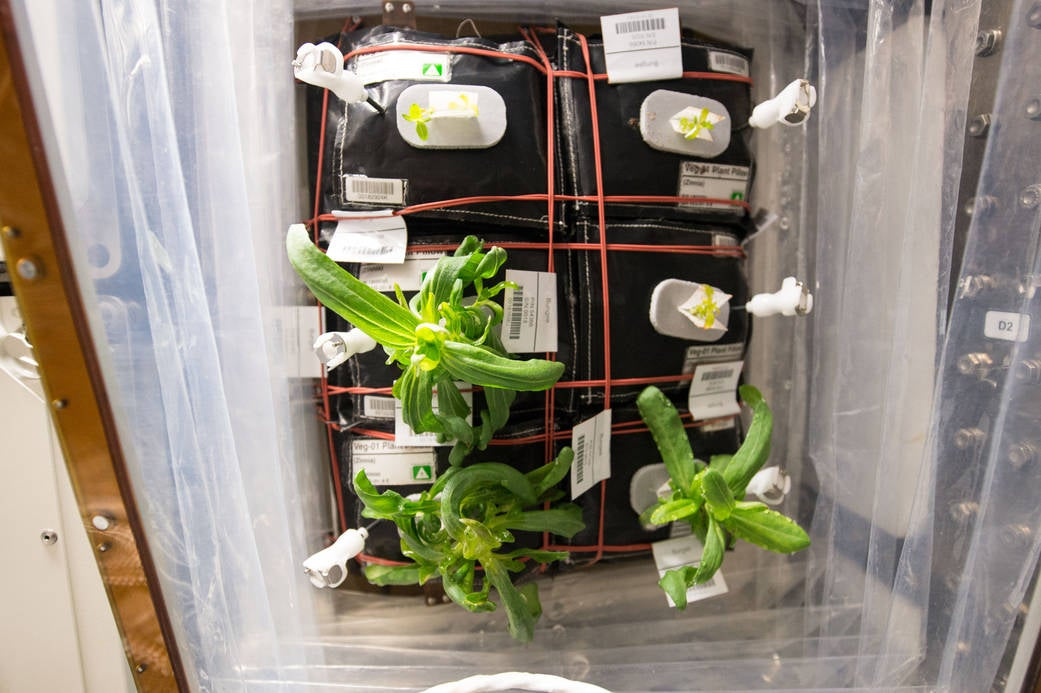 Astronauts' Veggie Garden in Space is About to Grow a Burst of Colour