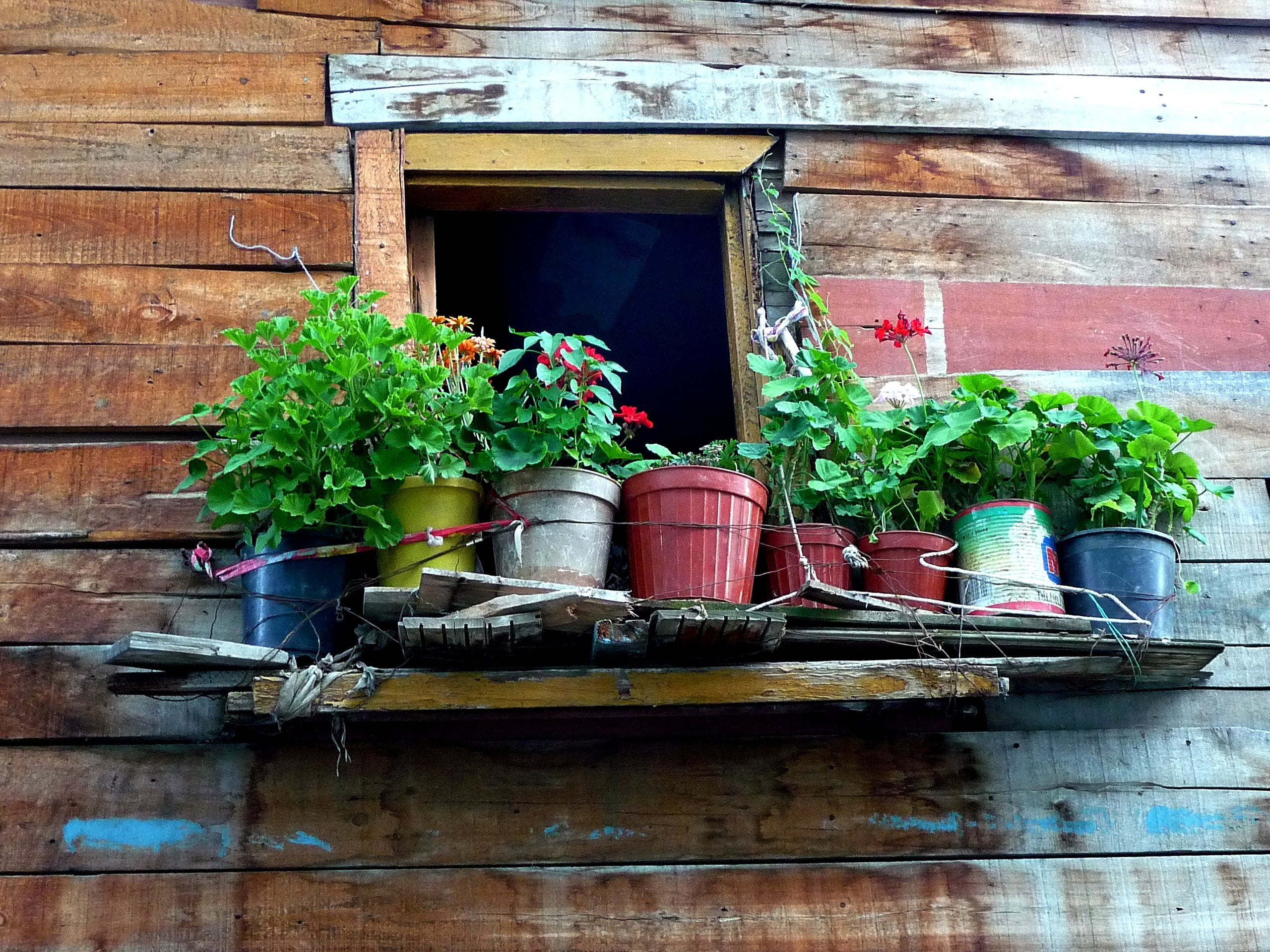 When And How To Bring Your Potted Plants Inside