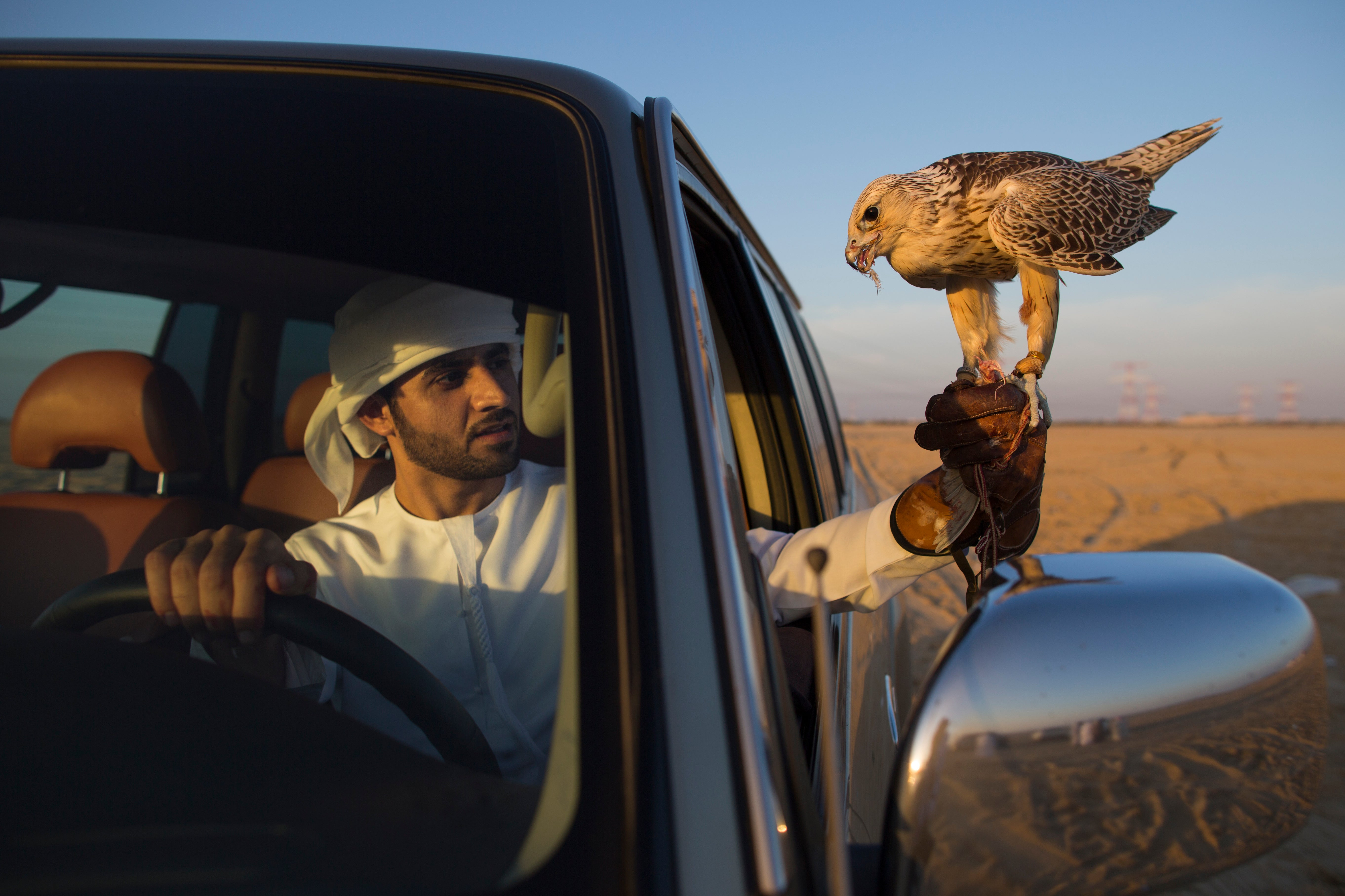 Falconers in Abu Dhabi Train Their Raptors With Drones