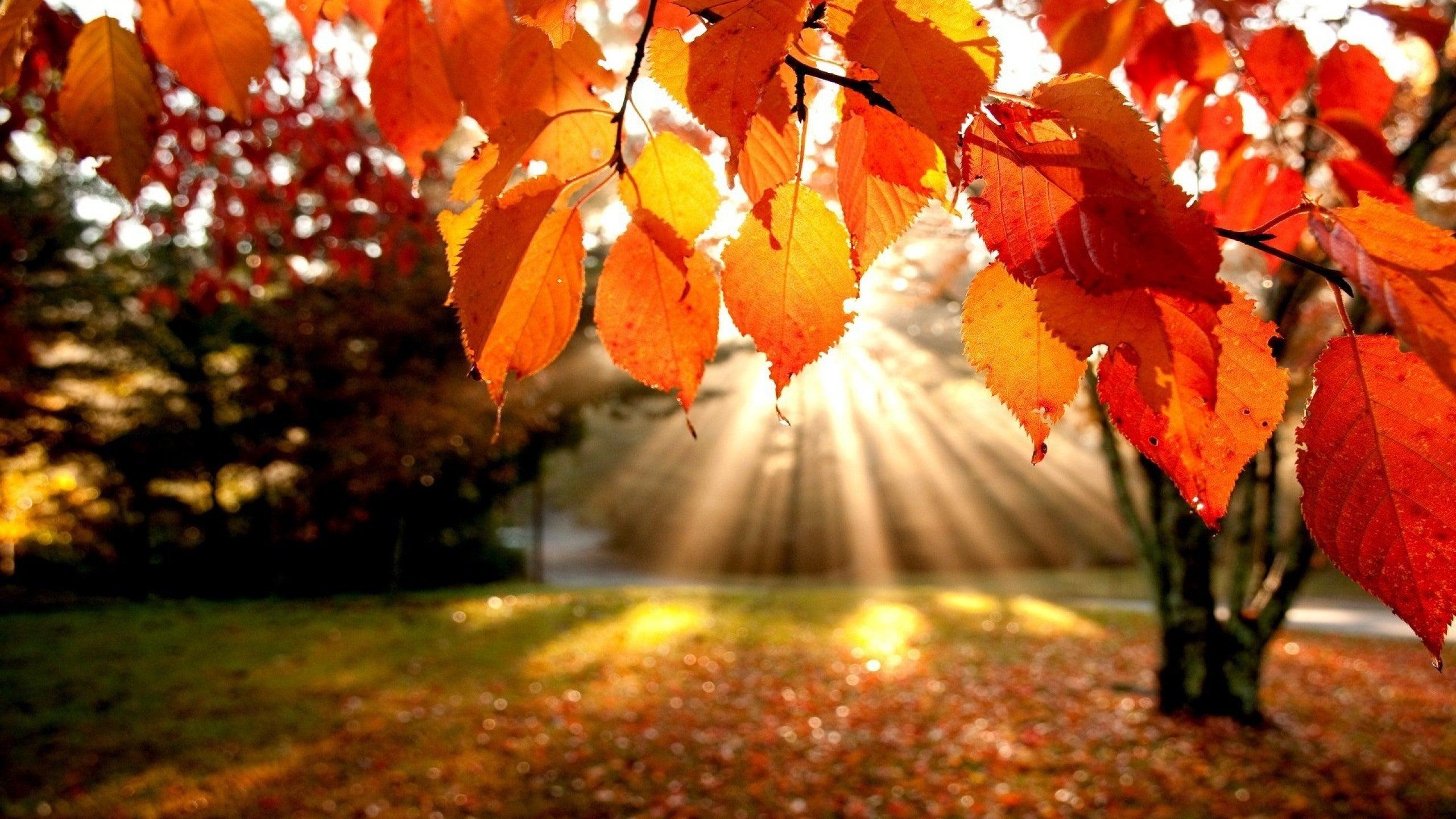 Лицей Осень - YouTube