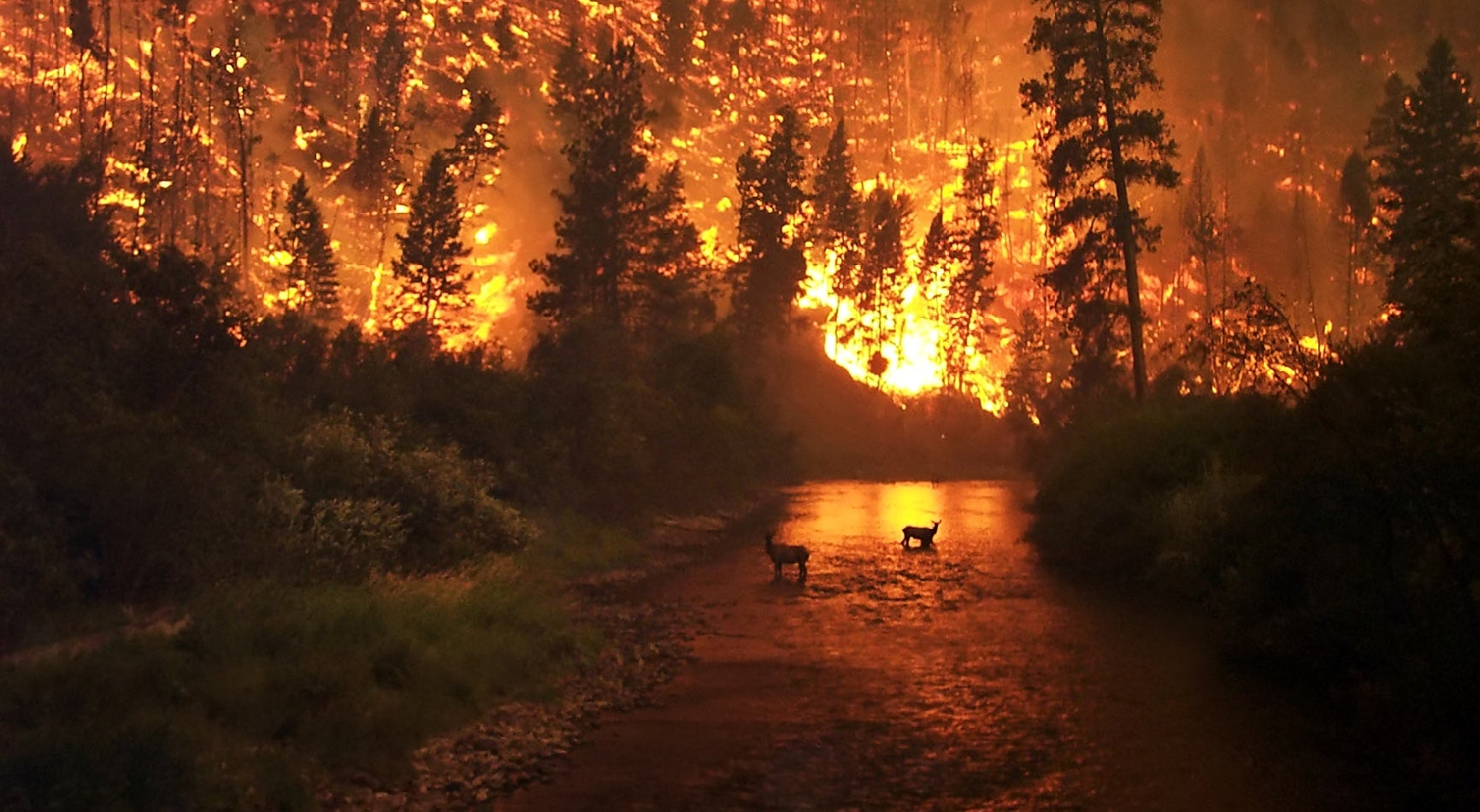 Humans Are Burning America To The Ground
