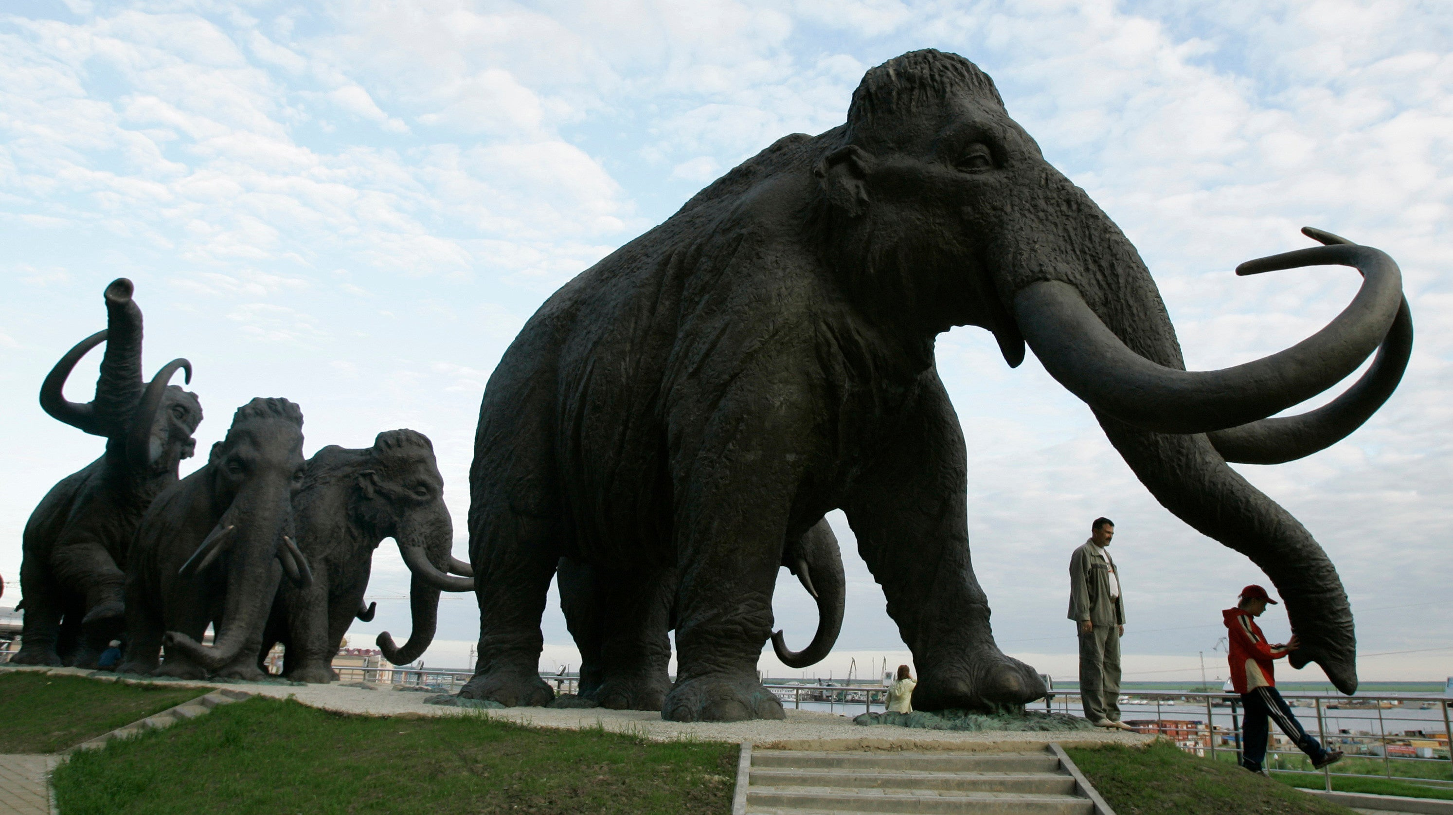 One Of The Last Mammoths On Earth Was So Mutated, It Lost The Ability To Smell Flowers