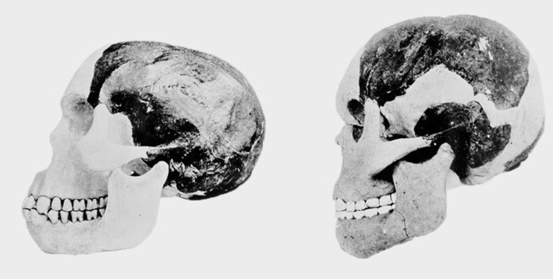 Piltdown Man Hoax Was The Work Of A Single Forger, Study Says