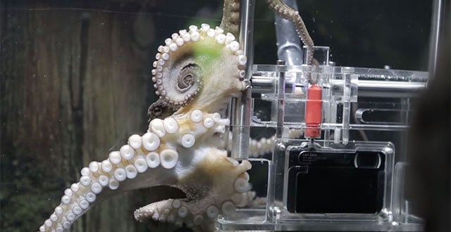 Holy Crap, This Octopus is Taking Pictures of Its Visitors
